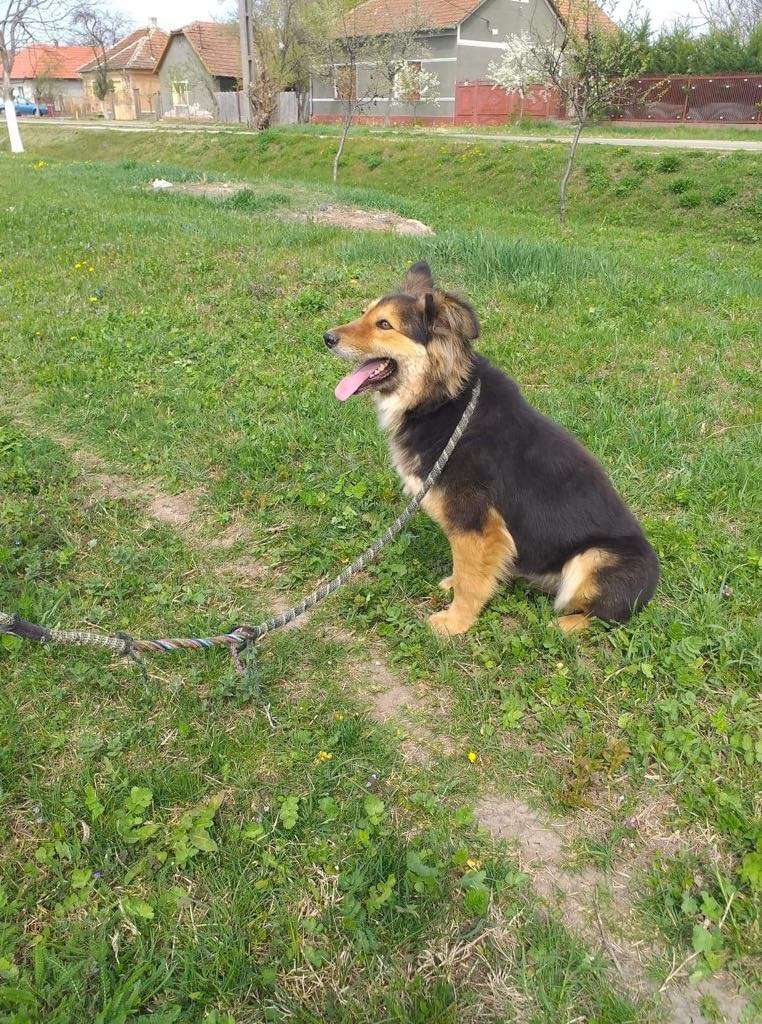 Anke - chienne femelle- refuge d'Arad - en famille d'accueil dans le 68 Anke_610