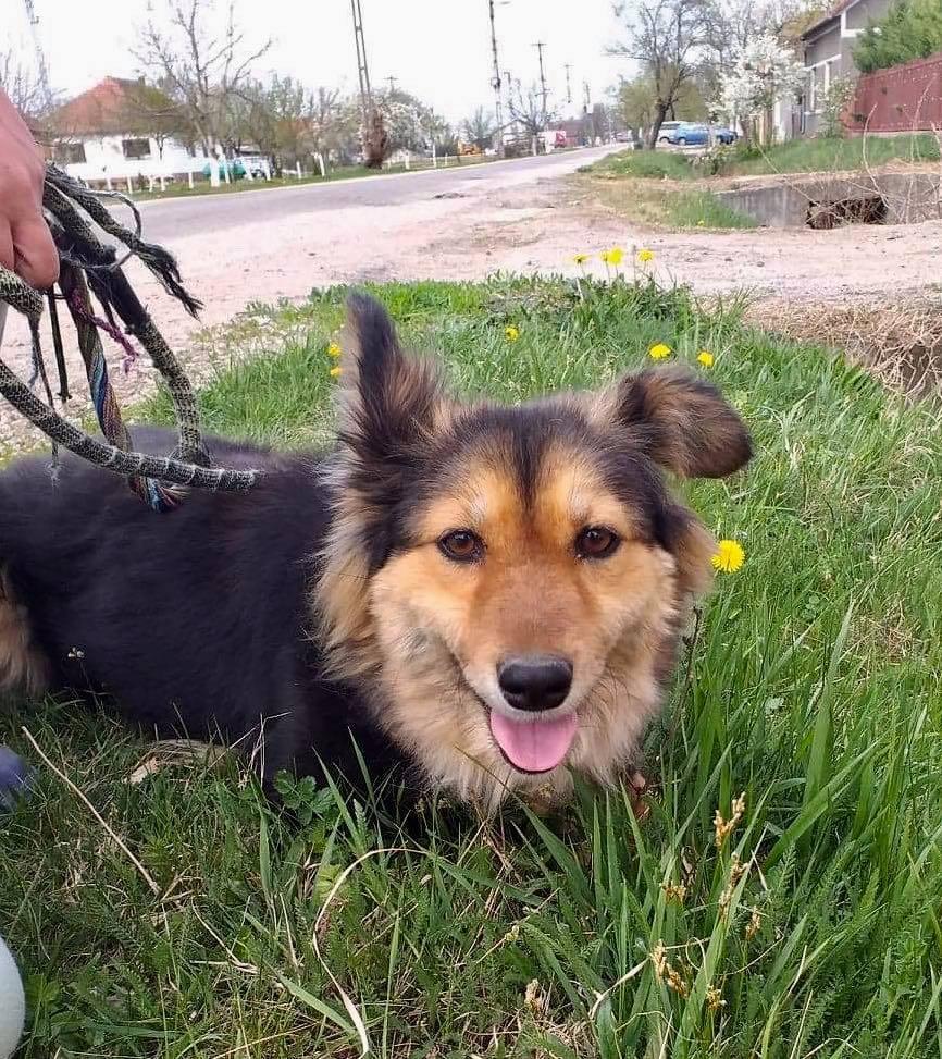 Anke - chienne femelle- refuge d'Arad - en famille d'accueil dans le 68 Anke_710