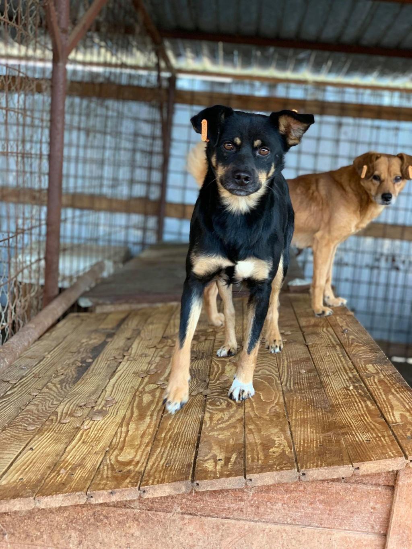 Cosmo - mâle - fourrière de Târgu Frumos - Réservé adoption (68) Apacho11