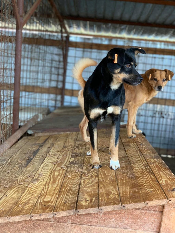 Cosmo - mâle - fourrière de Târgu Frumos - Réservé adoption (68) Apipic11