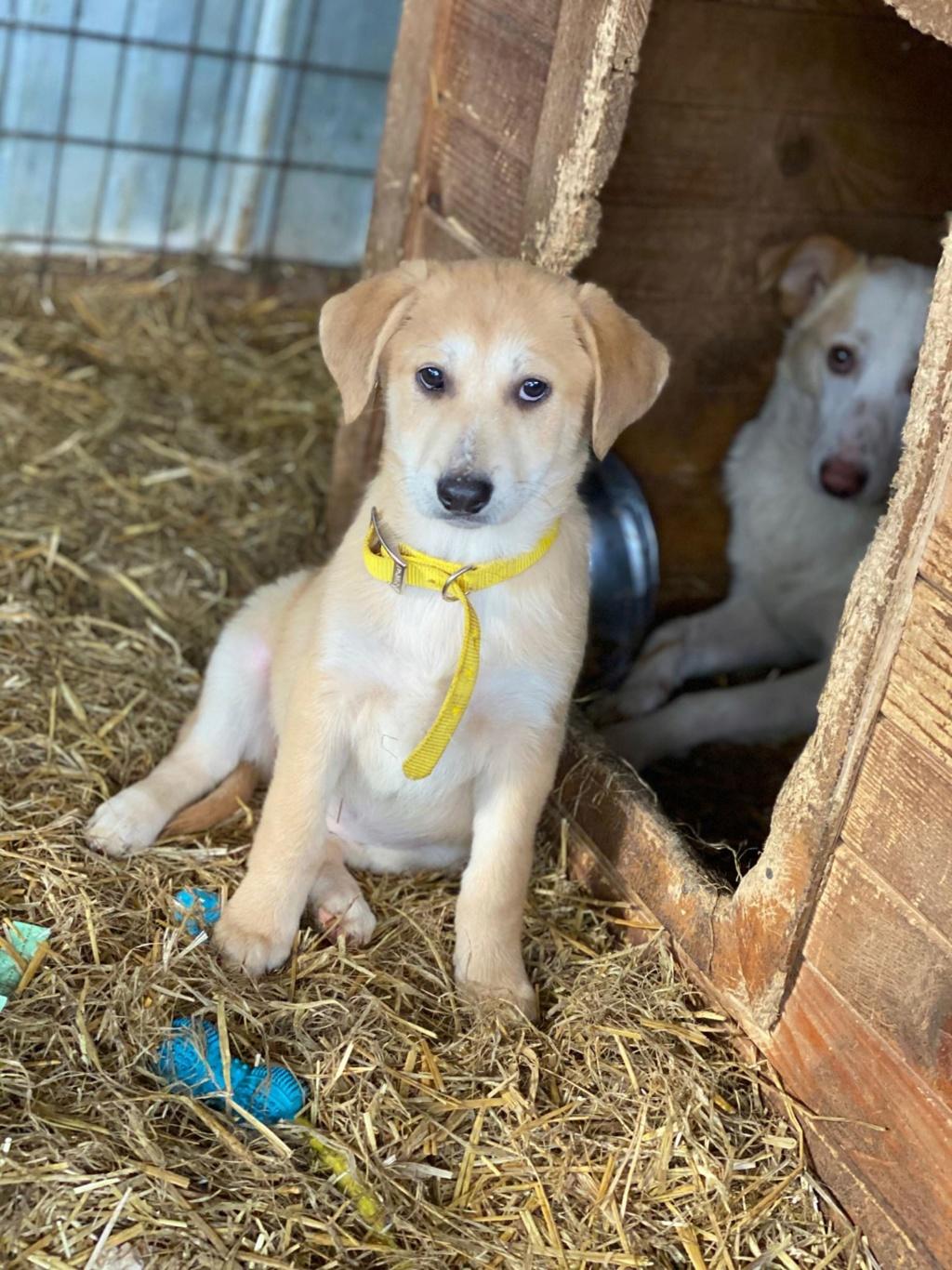 Appy- femelle- fourrière de Târgu Frumos - Réservée adoption (68) Appy_510