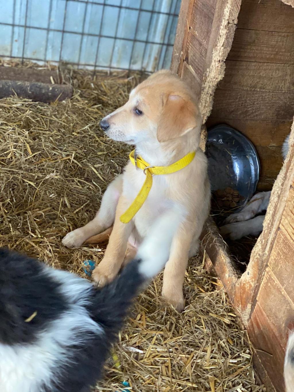 Appy- femelle- fourrière de Târgu Frumos - Réservée adoption (68) Appy_610