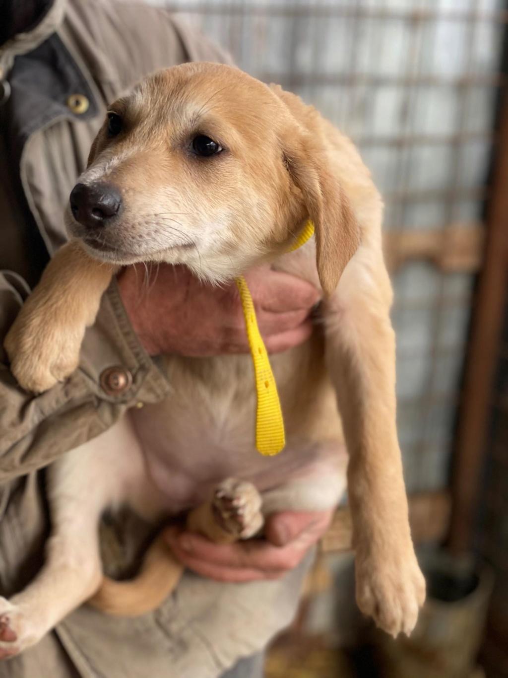 Appy- femelle- fourrière de Târgu Frumos - Réservée adoption (68) Appy_710