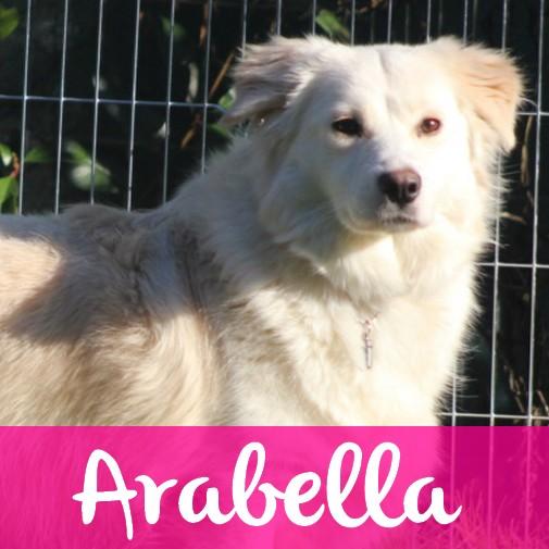 ArabellaF
