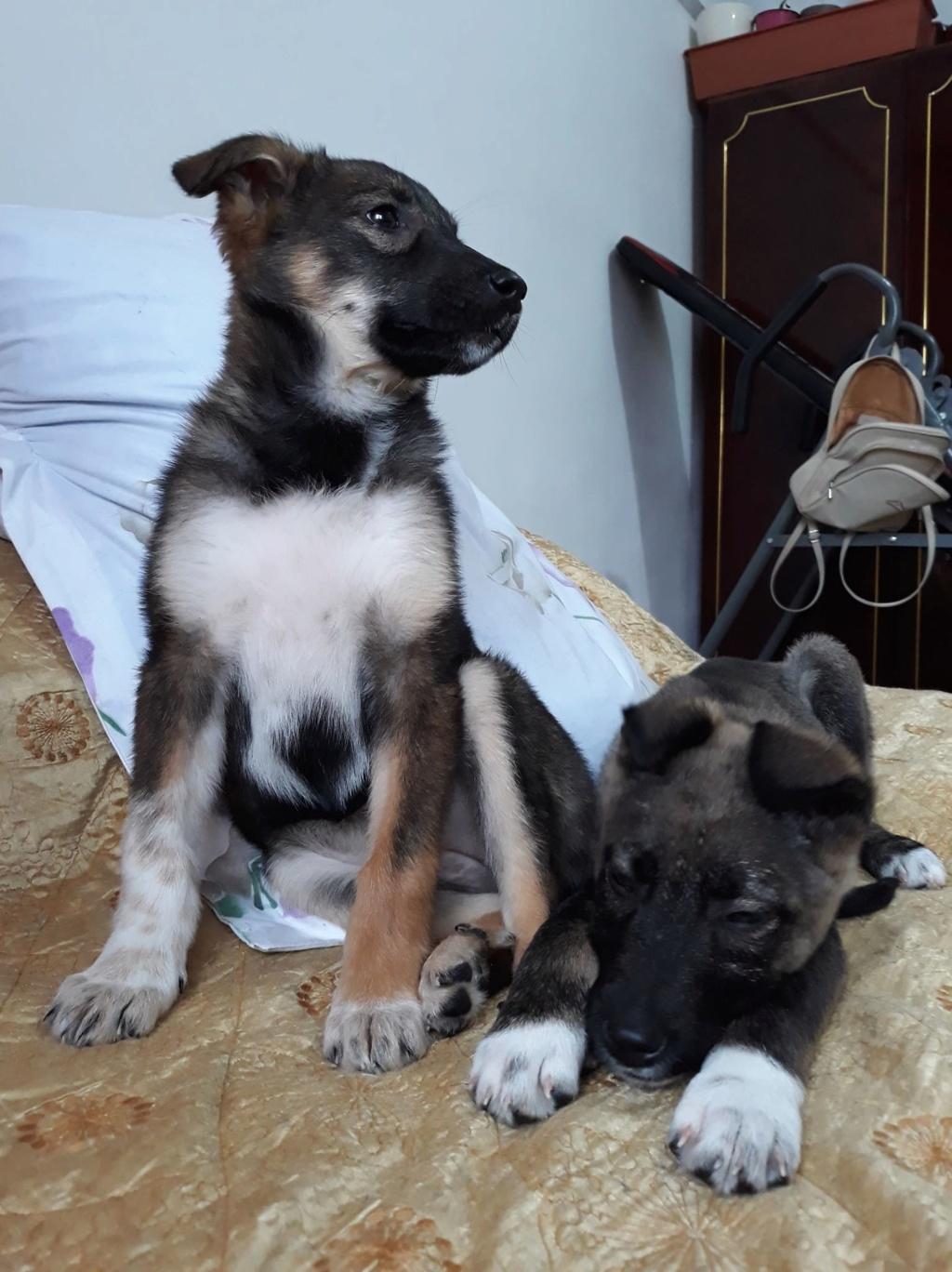 Archie- mâle- dans une famille d'accueil près de Târgu Frumos - adopté via Andréea Archie28