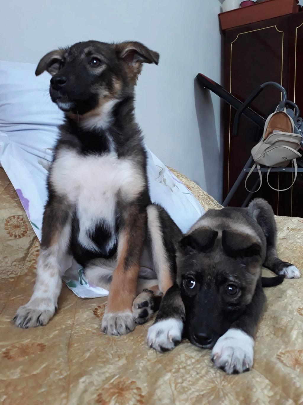 Archie- mâle- dans une famille d'accueil près de Târgu Frumos - adopté via Andréea Archie31