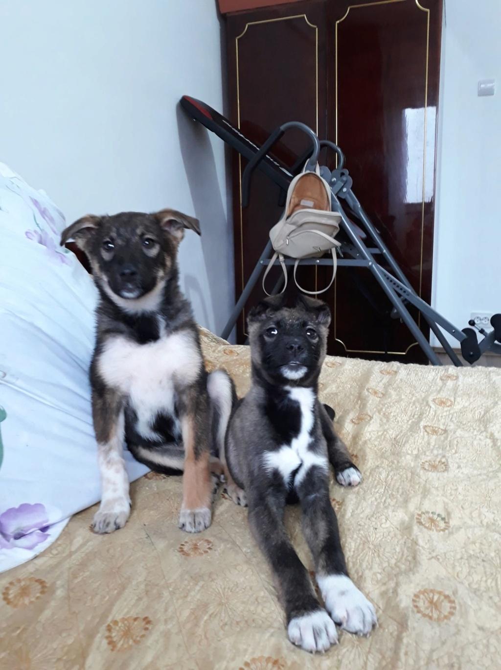 Archie- mâle- dans une famille d'accueil près de Târgu Frumos - adopté via Andréea Archie35