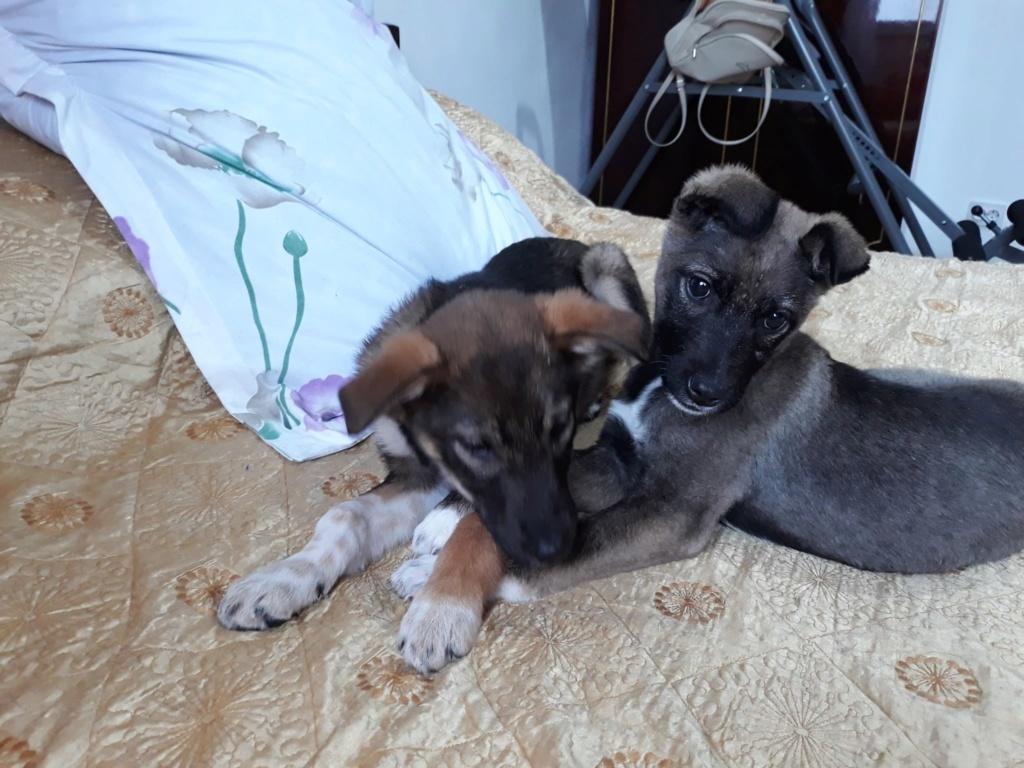 Archie- mâle- dans une famille d'accueil près de Târgu Frumos - adopté via Andréea Archie36