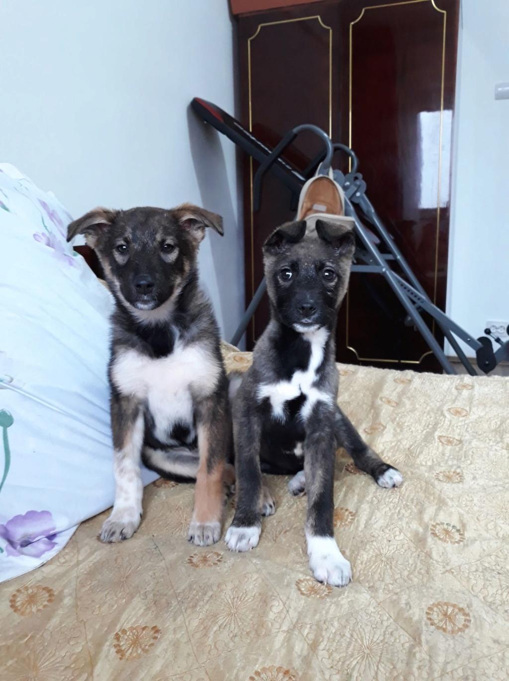 Archie- mâle- dans une famille d'accueil près de Târgu Frumos - adopté via Andréea Archie37
