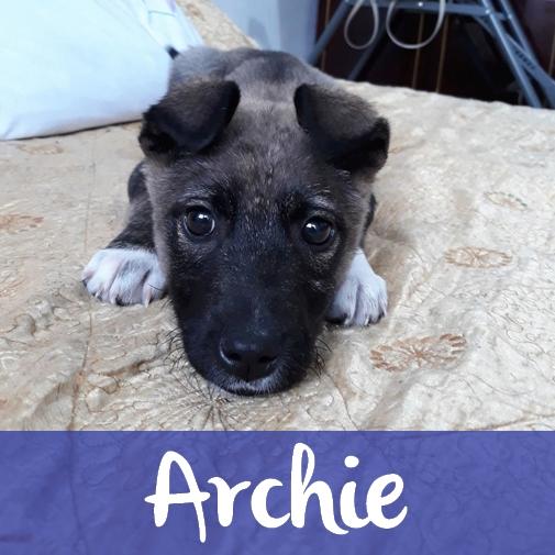 ArchieM