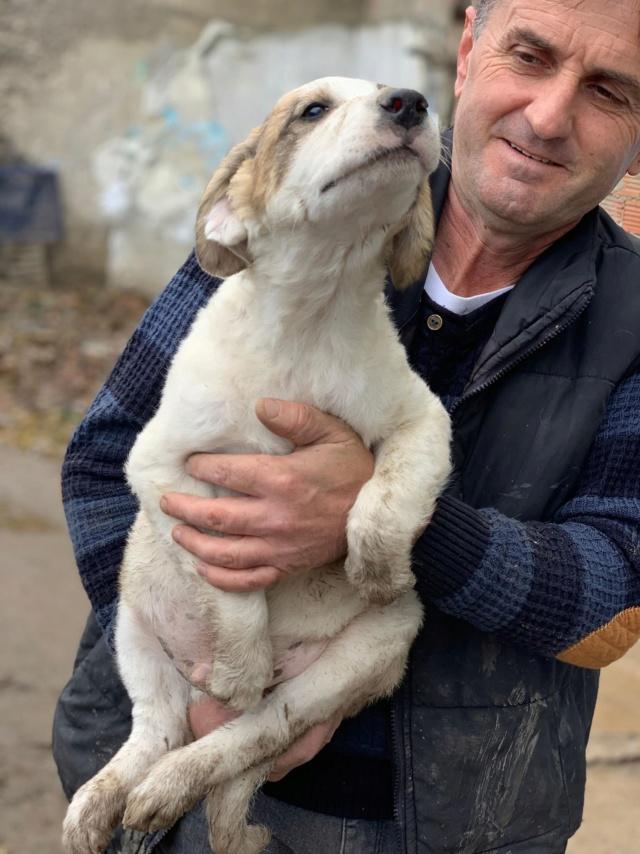 Arlito- mâle- à l'ancienne boulangerie de Târgu Frumos - adopté via Andreea Arlita10
