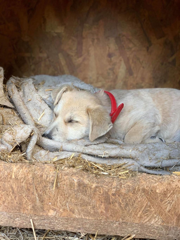 Armani- femelle- chez un bénévole près de Târgu Frumos - adoptée via Andreea Armani29