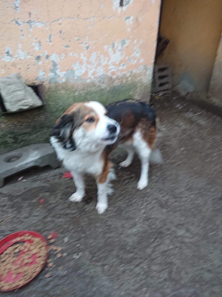 Arya-femelle-refuge d'Arad - réservée adoption (68) Arya_210