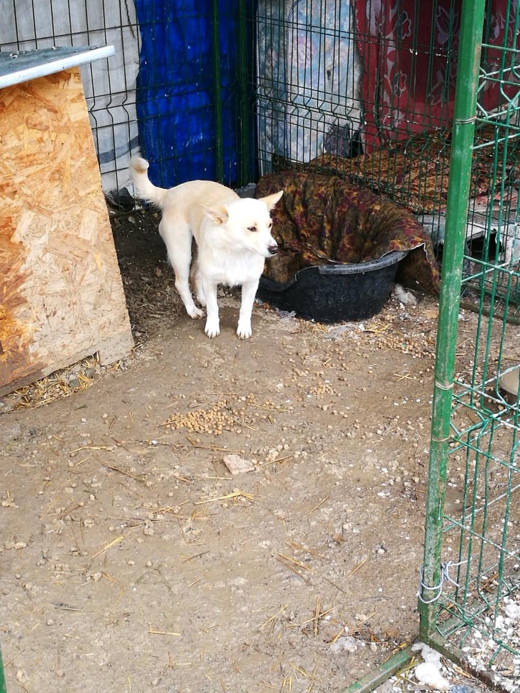 Nesta (ex-Asia) - femelle- Fourrière de Târgu Frumos - réservée adoption (68) Asia11
