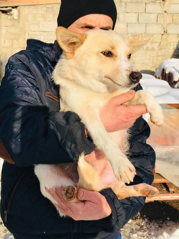 Nesta (ex-Asia) - femelle- Fourrière de Târgu Frumos - réservée adoption (68) Asia_111
