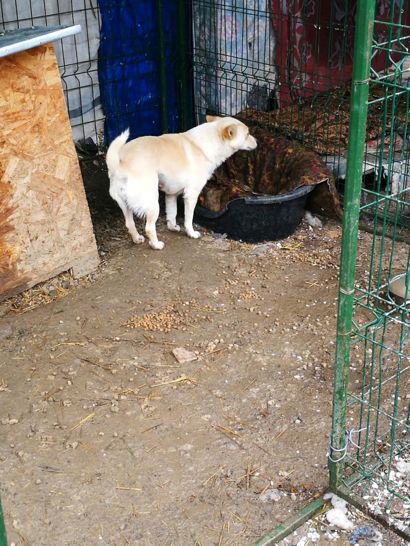 Nesta (ex-Asia) - femelle- Fourrière de Târgu Frumos - réservée adoption (68) Asia_211