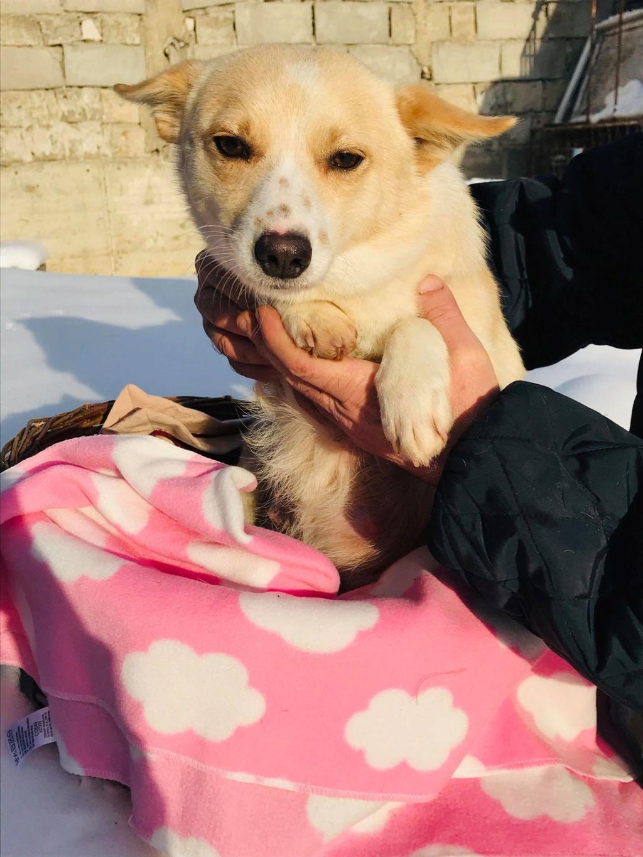 Nesta (ex-Asia) - femelle- Fourrière de Târgu Frumos - réservée adoption (68) Asia_410
