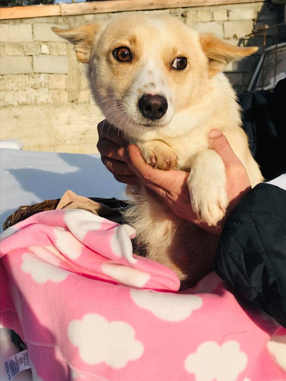 Nesta (ex-Asia) - femelle- Fourrière de Târgu Frumos - réservée adoption (68) Asia_510