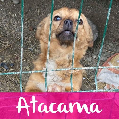 AtacamaF