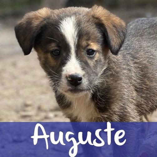 AugusteM