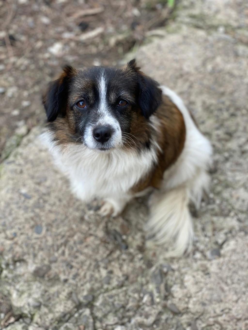 Ayana- femelle- fourrière de Târgu Frumos - Réservée adoption (10) Ayana_11