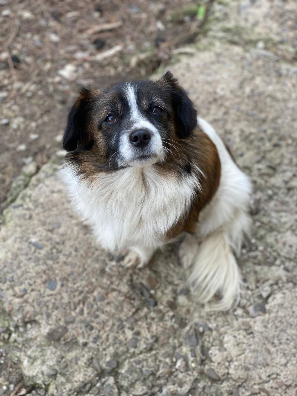 Ayana- femelle- fourrière de Târgu Frumos - Réservée adoption (10) Ayana_12