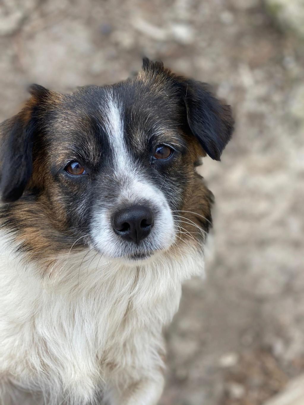 Ayana- femelle- fourrière de Târgu Frumos - Réservée adoption (10) Ayana_13
