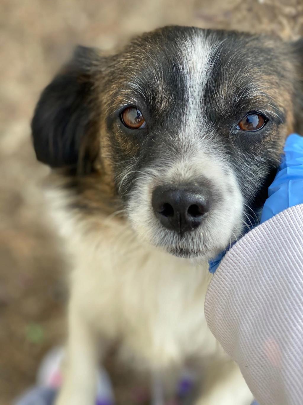 Ayana- femelle- fourrière de Târgu Frumos - Réservée adoption (10) Ayana_14