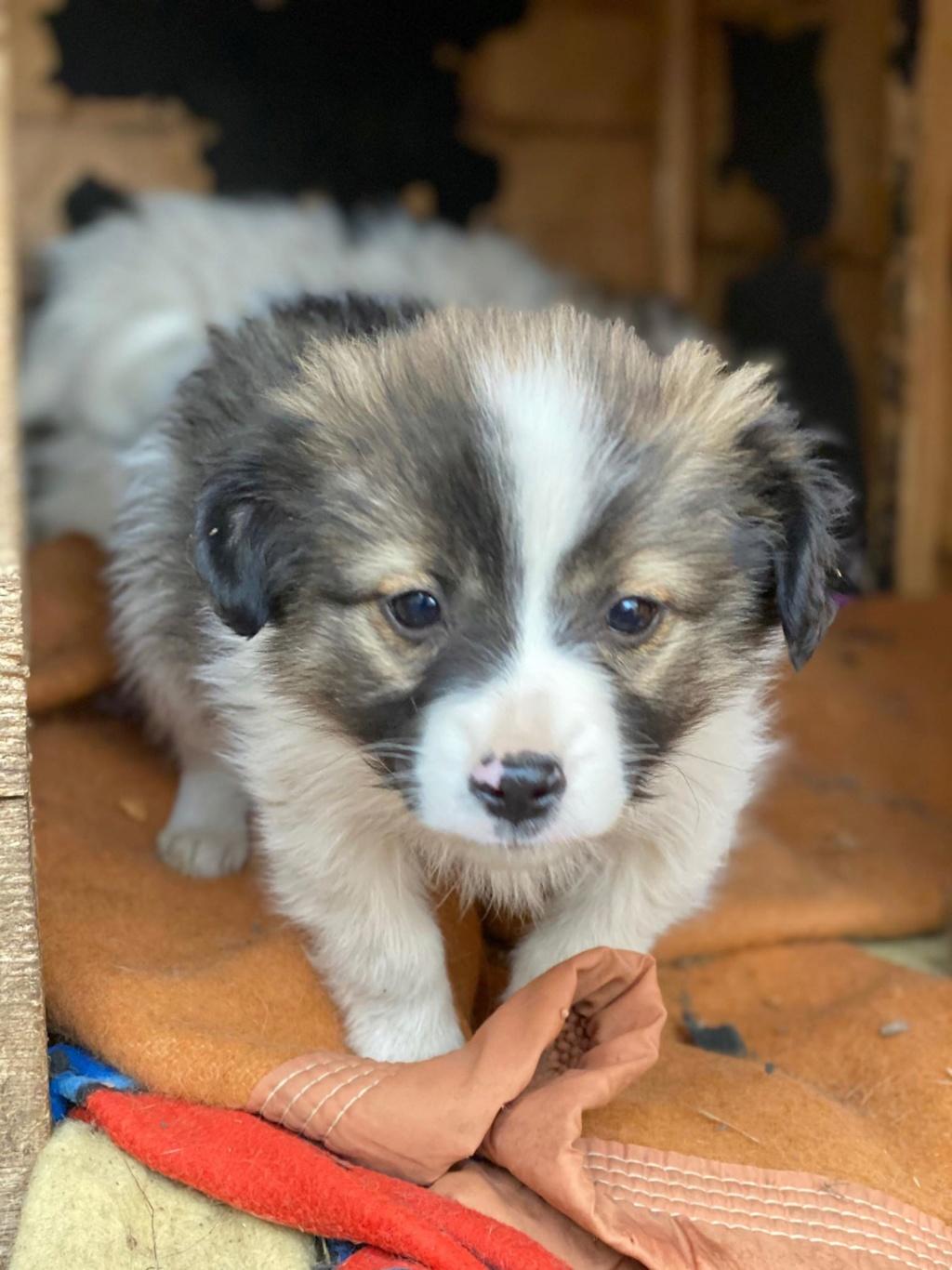 Ayana- femelle- fourrière de Târgu Frumos - Réservée adoption (10) Ayana_16