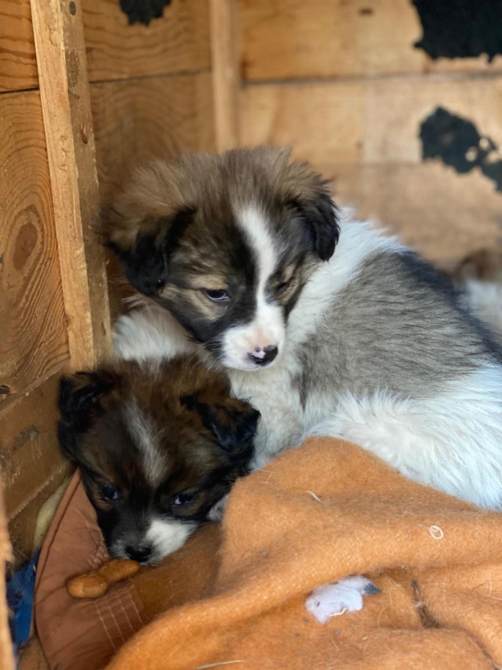 Ayana- femelle- fourrière de Târgu Frumos - Réservée adoption (10) Ayana_17