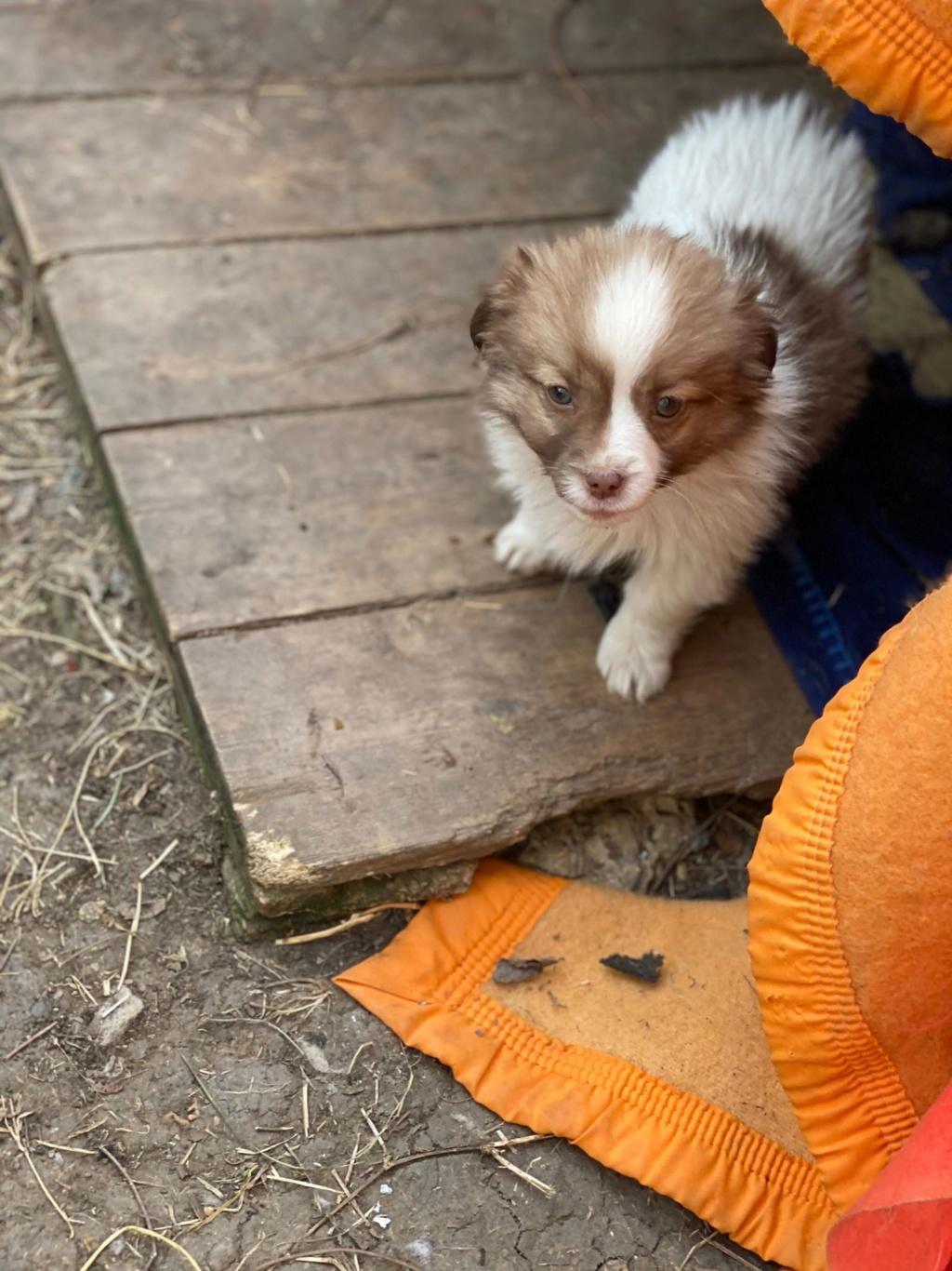 Ayana- femelle- fourrière de Târgu Frumos - Réservée adoption (10) Ayana_18