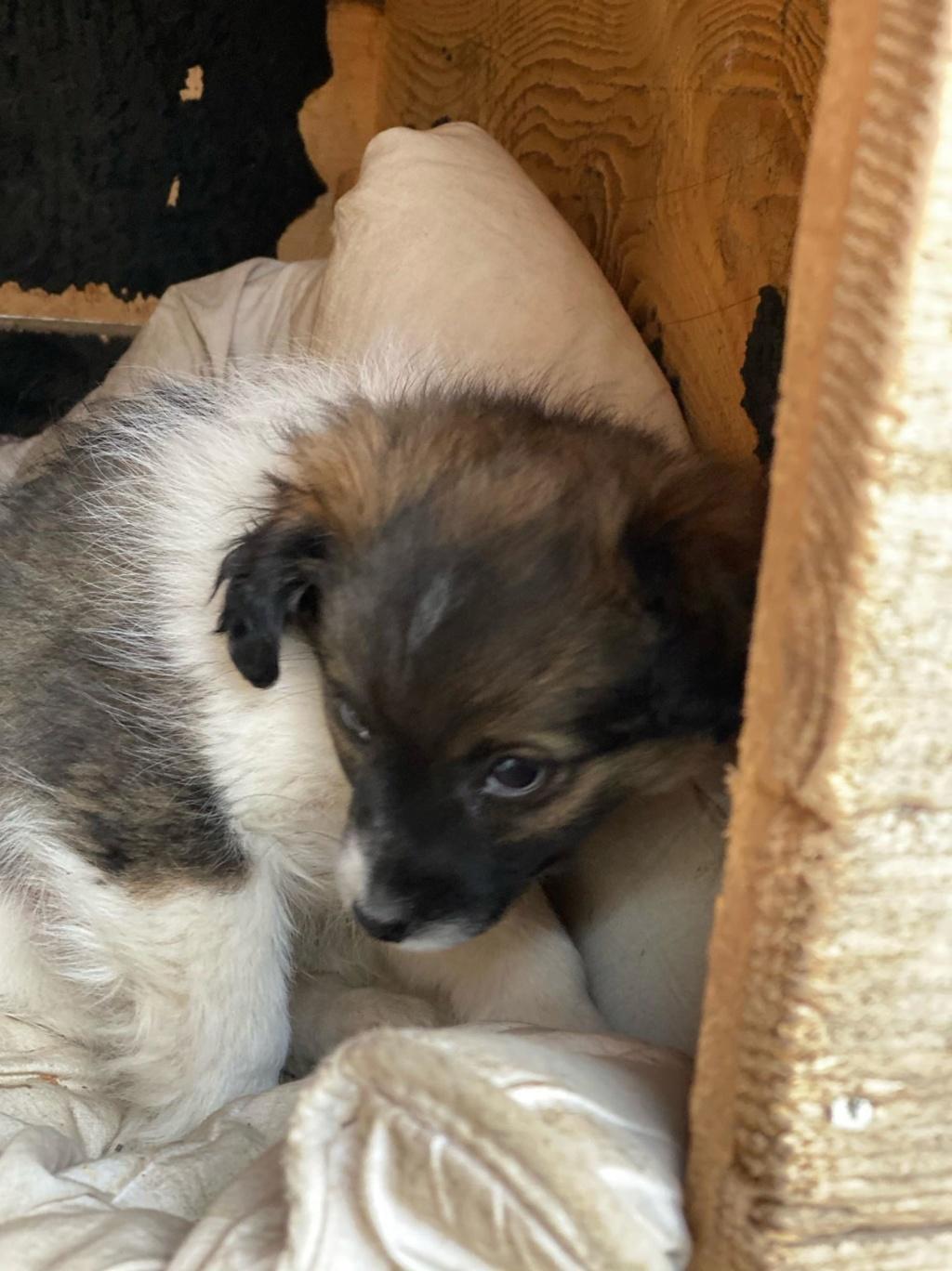 Ayana- femelle- fourrière de Târgu Frumos - Réservée adoption (10) Ayana_19