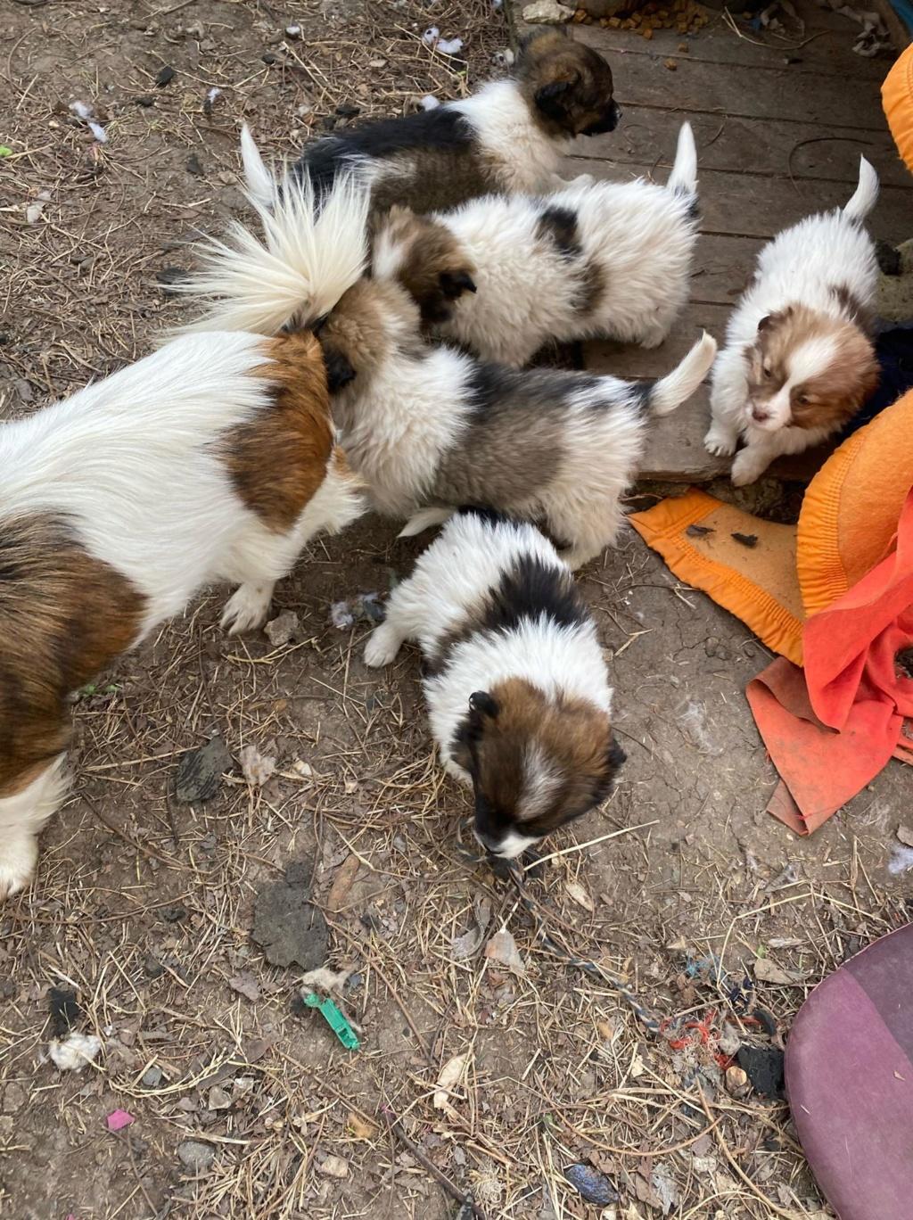 Ayana- femelle- fourrière de Târgu Frumos - Réservée adoption (10) Ayana_21