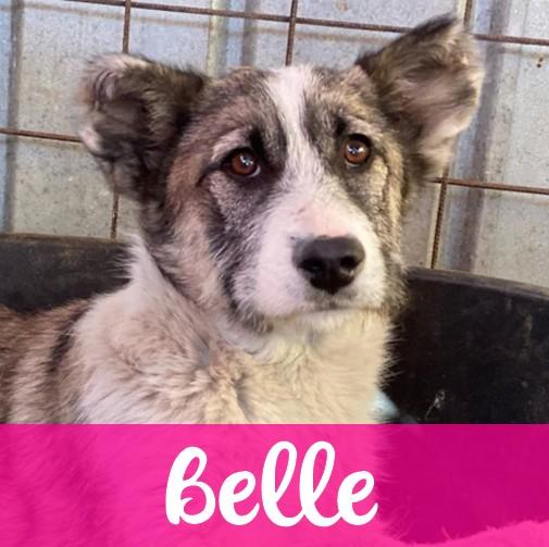 BelleF