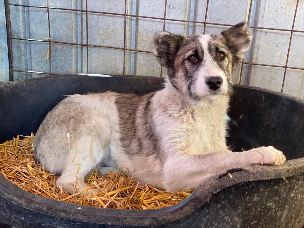 Belle- femelle- fourrière de Târgu Frumos - Réservée adoption (67) Belle_10