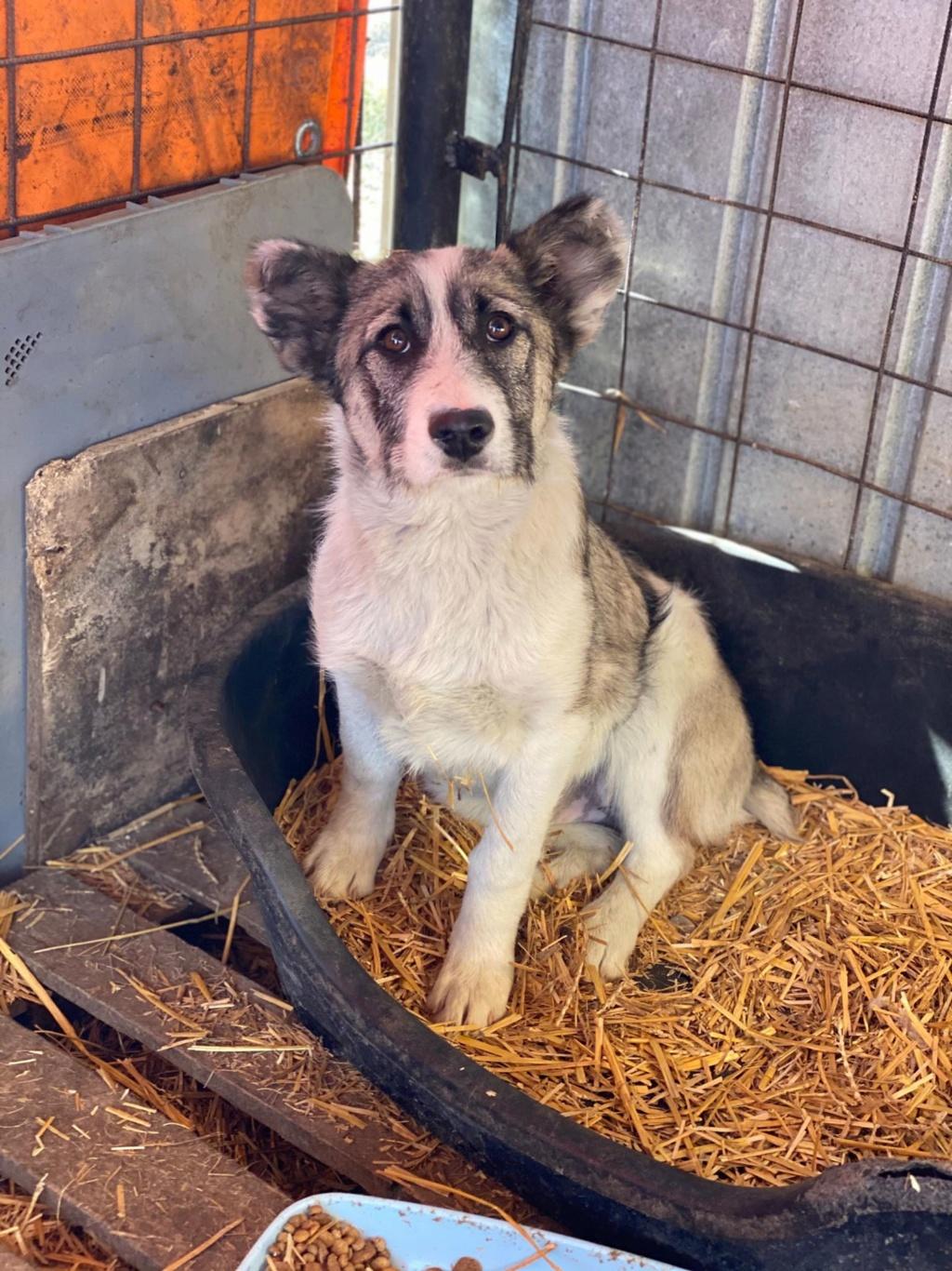 Belle- femelle- fourrière de Târgu Frumos - Réservée adoption (67) Belle_13