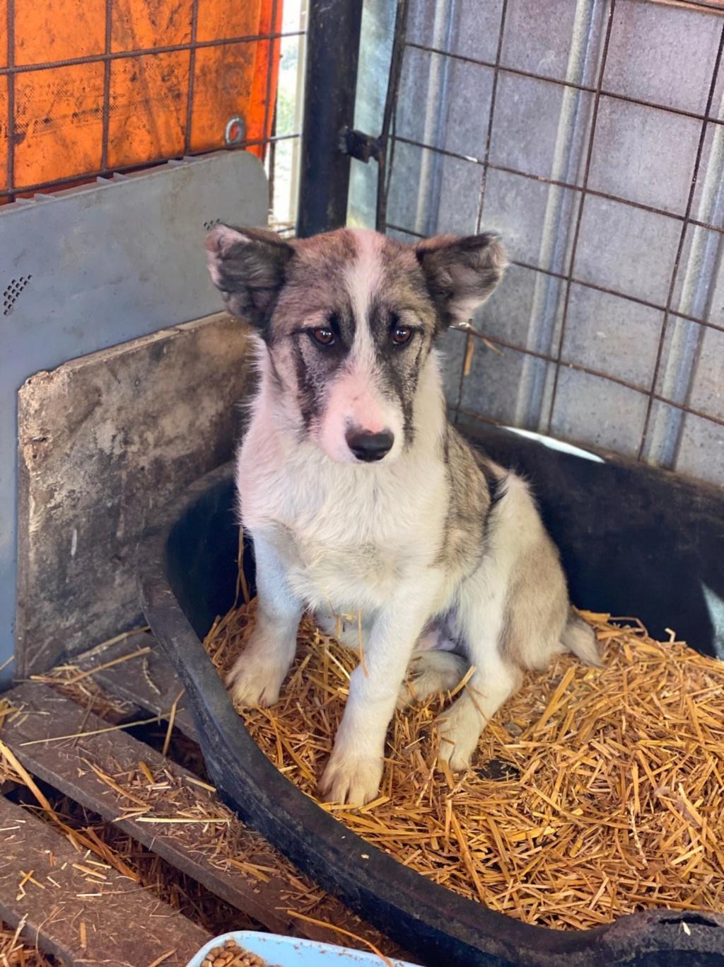 Belle- femelle- fourrière de Târgu Frumos - Réservée adoption (67) Belle_14