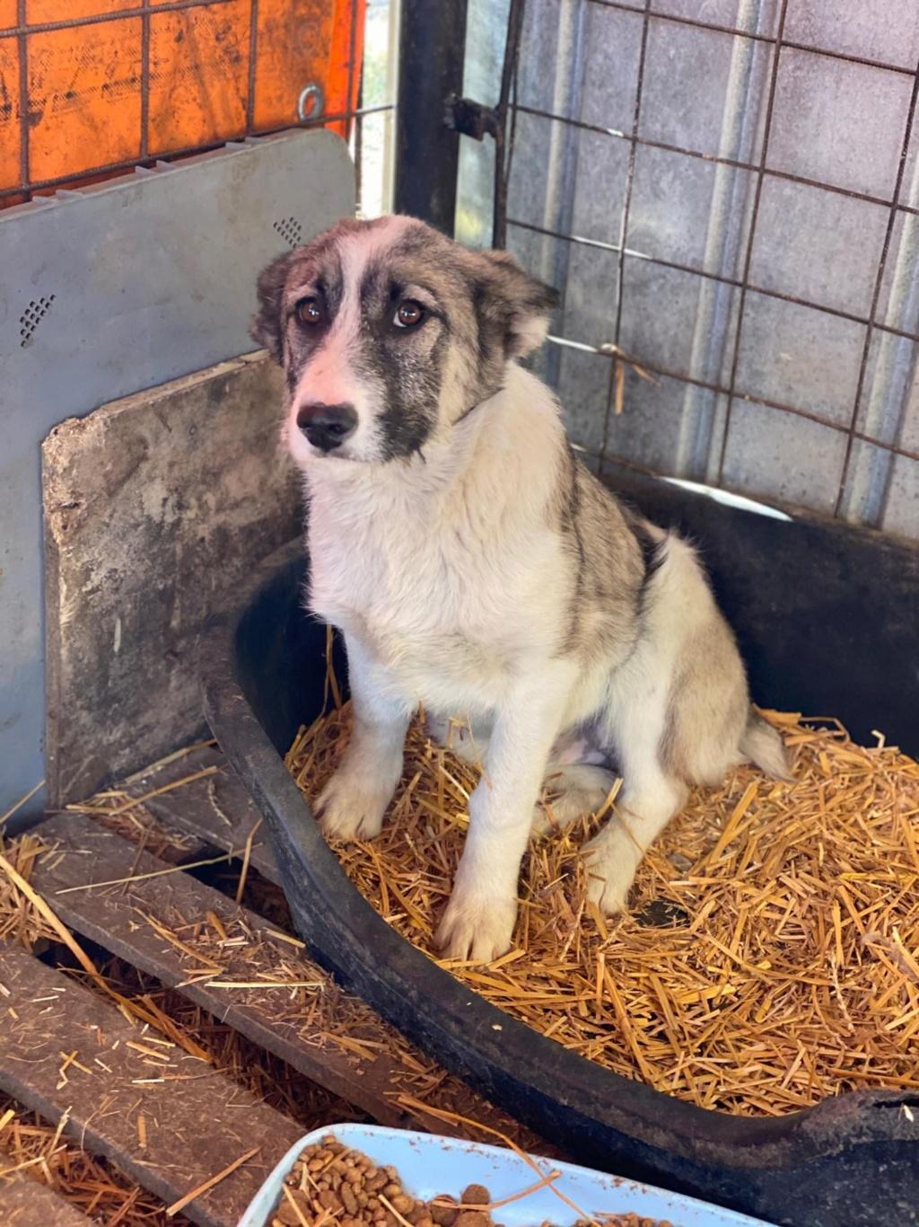 Belle- femelle- fourrière de Târgu Frumos - Réservée adoption (67) Belle_15