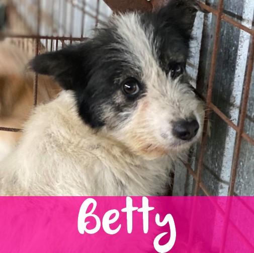 BettyF