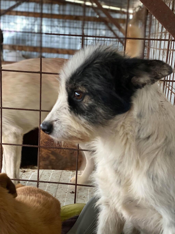 Betty-femelle- fourrière de Târgu Frumos - Adoptée via Andreea  Betty_10