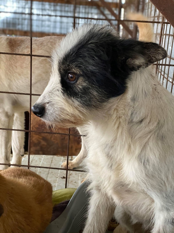 Betty-femelle- fourrière de Târgu Frumos - Adoptée via Andreea  Betty_12