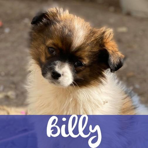 BillyM