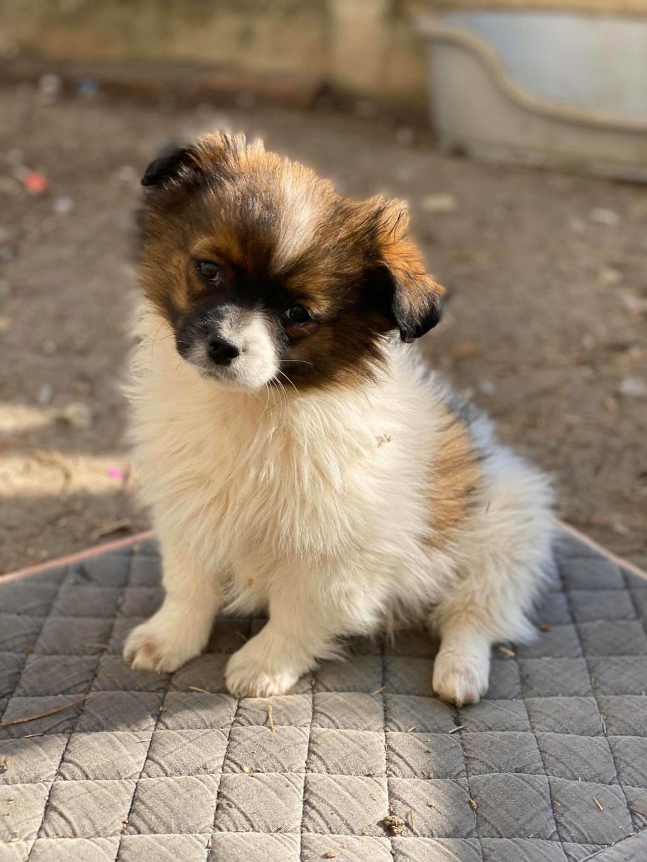 Billy- mâle -fourrière de Târgu Frumos Billy_11