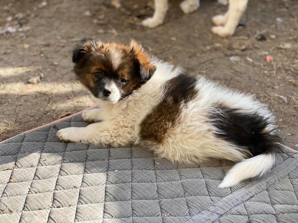 Billy- mâle -fourrière de Târgu Frumos Billy_14