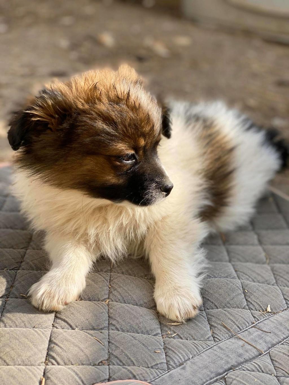 Billy- mâle -fourrière de Târgu Frumos Billy_18