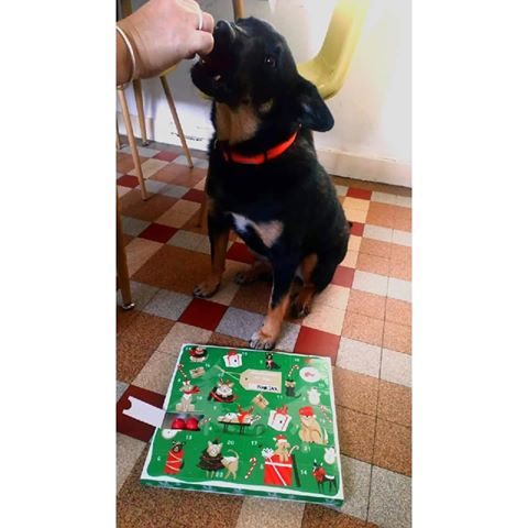 Blackjack - mâle - refuge de Târgu Frumos - réservé adoption (67) Blackj10
