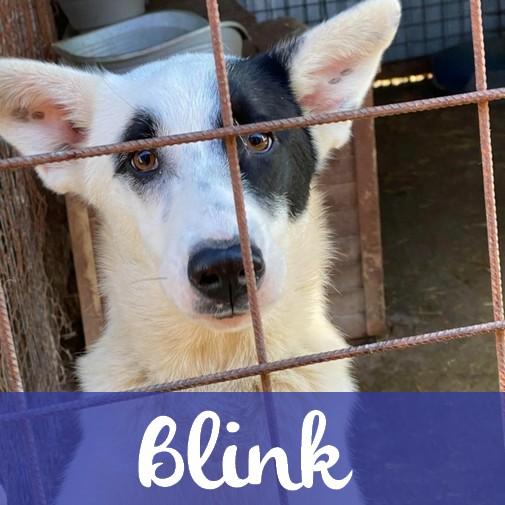 BlinkM