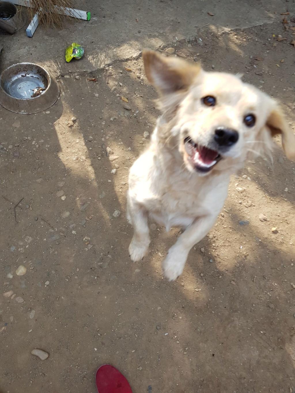 Blondie- femelle- en famille d'accueil à Arad - adoptée via Arad Blondi13
