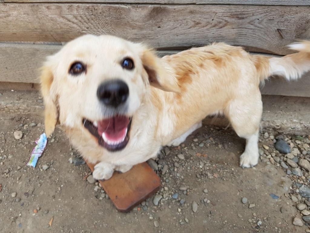 Blondie- femelle- en famille d'accueil à Arad - adoptée via Arad Blondi14