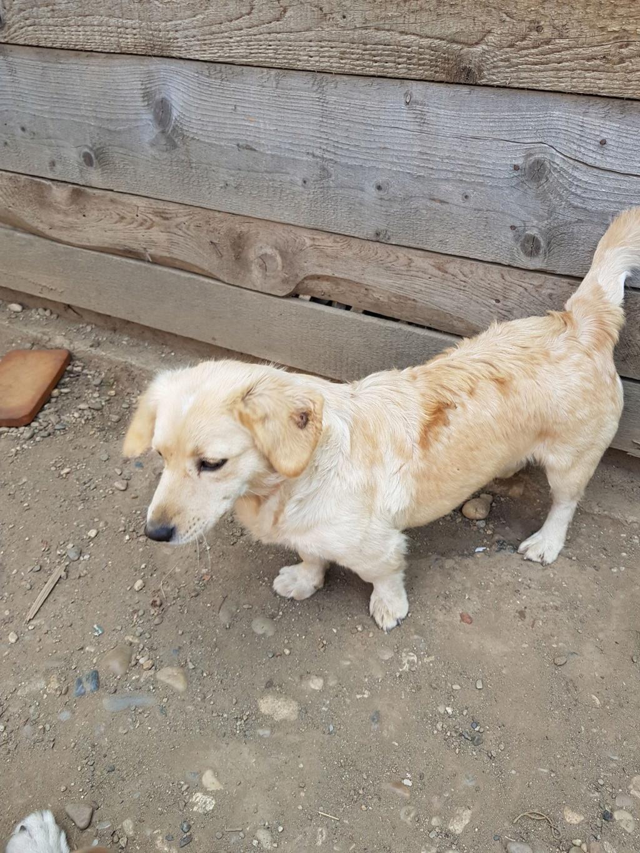 Blondie- femelle- en famille d'accueil à Arad - adoptée via Arad Blondi15